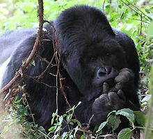 In a Pensive Mood: Mountain Gorilla by Carole-Anne