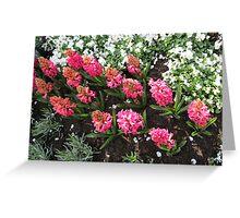 Deep Pink Hyacinths - Keukenhof Gardens Greeting Card