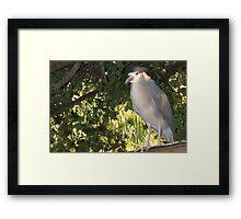 Rooftop heron Framed Print