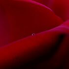 Red Rose 2 by TeAnne