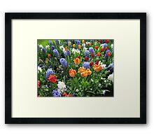Colourful Array of Tulips and Hyacinths - Keukenhof Gardens Framed Print