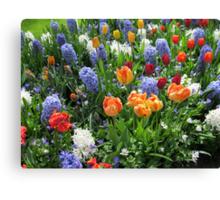 Colourful Array of Tulips and Hyacinths - Keukenhof Gardens Canvas Print