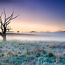 Old Tree Carcoar, NSW, Australia by Jennifer Bailey