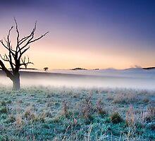 Old Tree Carcoar, NSW, Australia by Jennifer Bailey