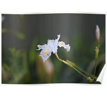 delicate white flower macro Poster