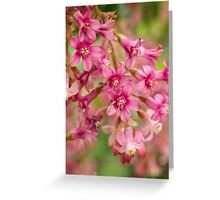 Pink-flowering currant Greeting Card