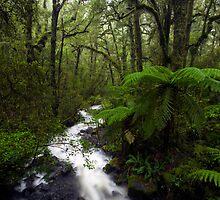 Fiordland Wilderness by Michael Treloar