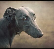 The Sighthound by polly470