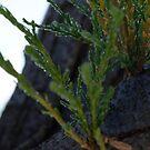 Green Drops by magicamente