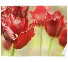 Tulips in red Poster