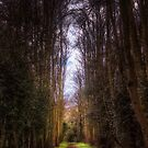 Tall Tree Path by Vicki Field