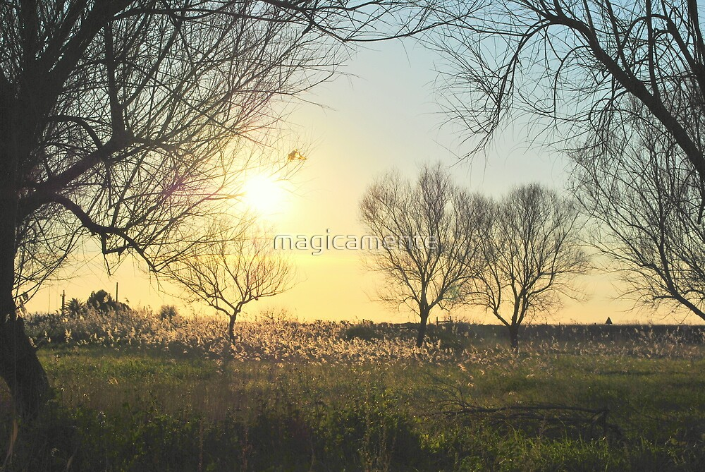 Lost in a garden by magicamente