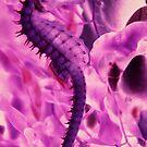 Pink Seahorse by phoenixpixx