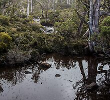 Mt Field National Park - Tarn by Anthony Evans