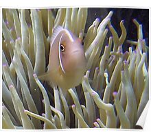 WHERE IS EVERYBODY - ANEMONIE FISH Poster