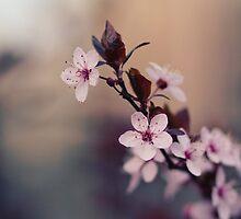Spring flowers by SkinnyBoy