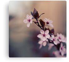 Spring flowers Canvas Print