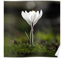 Lonesome Flower Poster