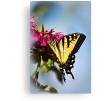 Out of the Blue Butterfly Canvas Print