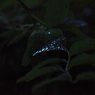 Morning Diamonds by budrfli