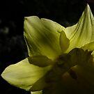 Garden Spirit by Themis