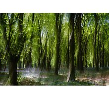 Mystical Bluebell Wood Photographic Print