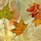 Leaves by Scott Mitchell