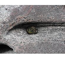 A Frog For An Eye! Photographic Print