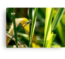 Willow Emerald. Canvas Print