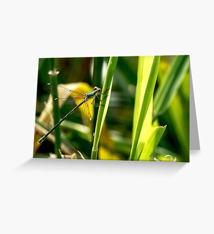Willow Emerald. Greeting Card