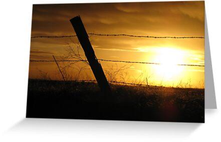 Fence Post by Brenda Dahl