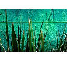 green wall Photographic Print