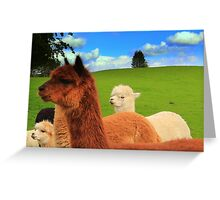 English Llama's, very rare breed !!. Greeting Card
