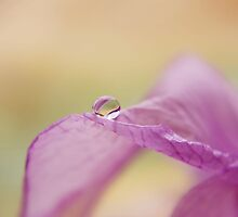 a touch of lilac by Ingz