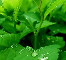 Morning dew by ciriva