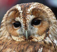 Wildlife by Christopher Lloyd