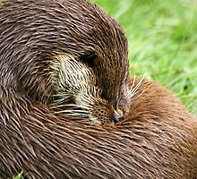 Otter Cleaning by Christopher Lloyd