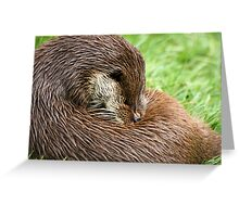 Otter Cleaning Greeting Card