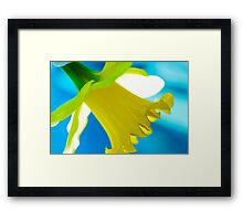 Daffodil Blues Framed Print