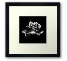 Perfect rose in black and white Framed Print