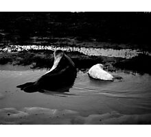 Mother and Baby Seals Photographic Print
