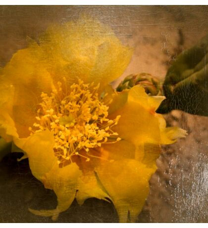 Antiqued Yellow Cactus Bloom Sticker