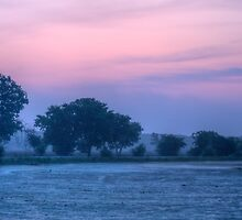Early Morning At Brazos Bend State Park by Diego  Re