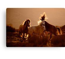 Horses Wales Canvas Print