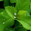 Morning dew 5 by ciriva