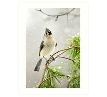 Snowy Songbird Christmas Bird Art Art Print