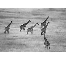 Which Way- Masai Mara Kenya Photographic Print