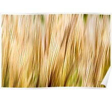 Nature Abstract Fall Grass Poster