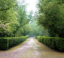 Garden-way by João Pereira