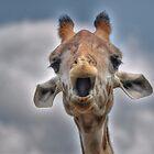 Giraffe  by Savannah Gibbs